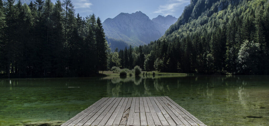 Bioeconomie e foreste europee